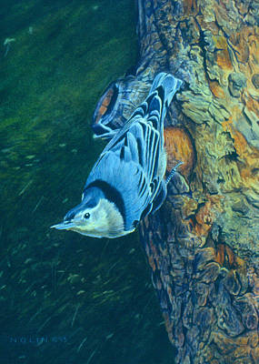 Painting - Nuthatch by Bob Nolin