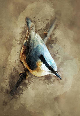 Photograph - Nuthatch On The Branch by Jaroslaw Blaminsky