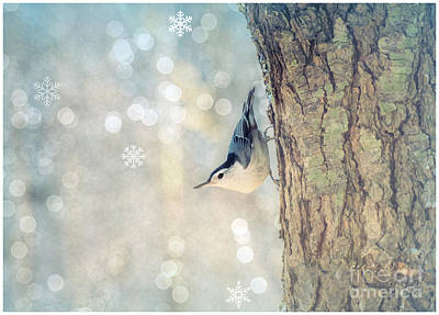 Photograph - Nuthatch Season's Greetings by Rima Biswas