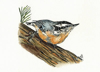 Painting - Nuthatch by Shari Nees