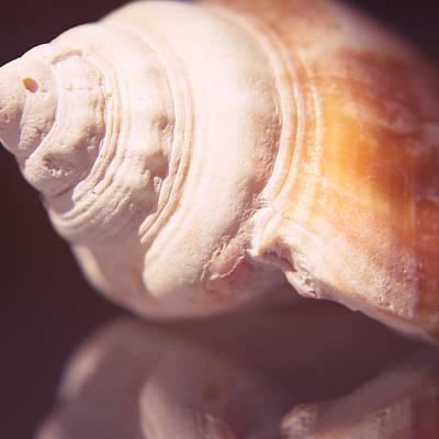 Nutmeg Shell Art Print