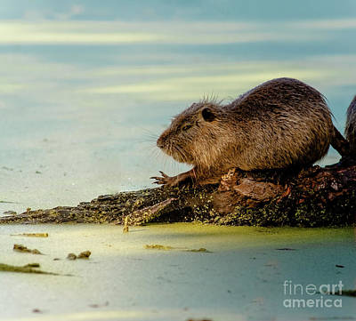 Car Window Photograph - Nutria by Robert Frederick