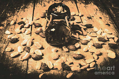 Wallpaper Photograph - Nuts About Vintage Still Life Art by Jorgo Photography - Wall Art Gallery