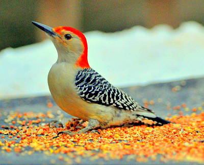 Nuttall's Woodpecker Original