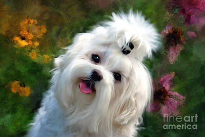 Maltese Photograph - Nuttin But Love Painterly by Lois Bryan
