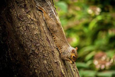 Photograph - Nutty by Stewart Scott