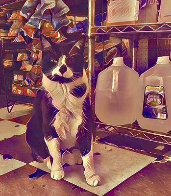 Digital Art - Nyc Bodega Cat by Gina Callaghan