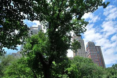 Photograph - Nyc View From Central Park by Matt Harang
