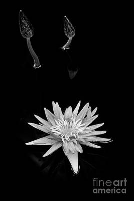 Photograph - Nymphaea Foxfire by Tim Gainey