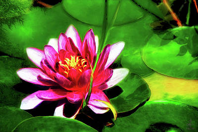 Photograph - Nymphaea by Pennie McCracken