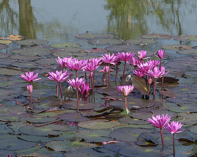 Photograph - Nymphaea Water Lily Dthst0079 by Gerry Gantt