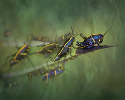 Photograph - Nymphs by Robert FERD Frank