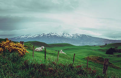 Art Print featuring the photograph Nz Dreaming by Nisah Cheatham