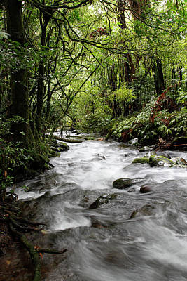 Spring Scenery Photograph - Nz Forest Stream by Les Cunliffe