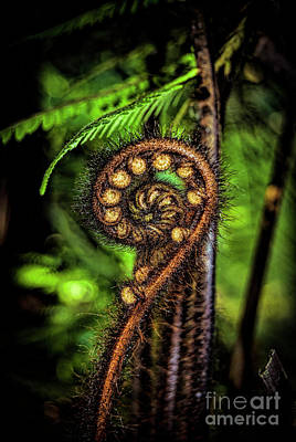 Photograph - Nz Koru by Karen Lewis