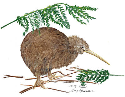 Kiwi Drawing - Nz Native Kiwi Bird by Christina Maassen
