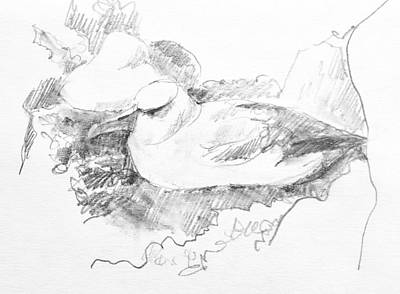 Drawing - New Zealand White-capped Mollymawk by Abby McBride