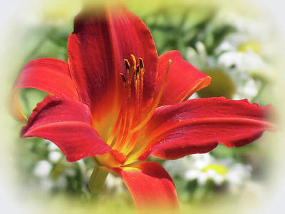 Photograph - O Red - Daylily by MTBobbins Photography