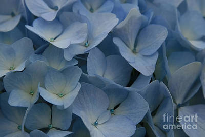 Photograph - O Sapphire Heaven Soft And Low  by Sharon Mau