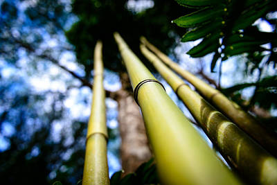 Photograph - Oahu Hawaii Bamboo Stalks 2 by Michael Scott