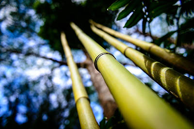 Photograph - Oahu Hawaii Bamboo Stalks  by Michael Scott