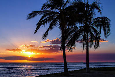 Photograph - Oahu Palms by Chris Austin