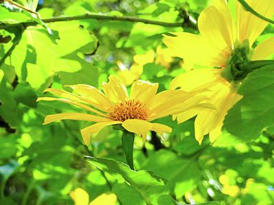 Photograph - Oahu Sunshine by Robert Meyers-Lussier