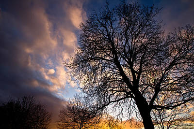 Photograph - Oak Against The Sky by Justin Albrecht