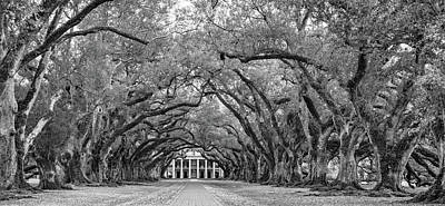 Oak Alley 4 Bw Art Print