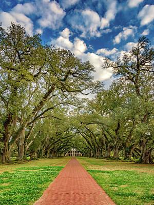 Tree Roots Photograph - Oak Alley 7 by Steve Harrington