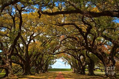 Photograph - Oak Alley Avenue Of The Oaks by Adam Jewell
