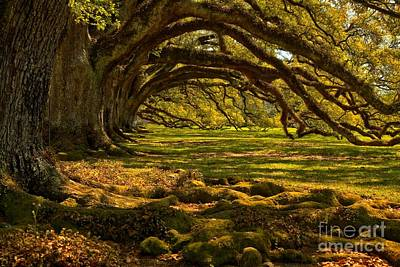 Photograph - Oak Alley Endless Oaks by Adam Jewell