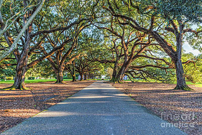 Plantations Photograph - Oak Alley Endless Trees by Tod and Cynthia Grubbs