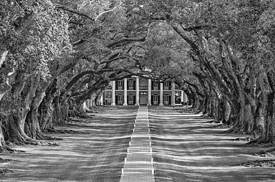 Tree Roots Photograph - Oak Alley Evening Bw by Steve Harrington