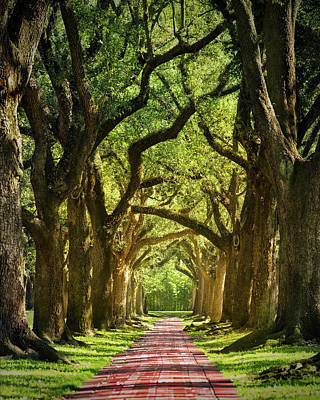 Oak Alley Print by Mikes Nature