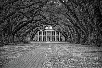 Photograph - Oak Alley Near Nola by Kathleen K Parker