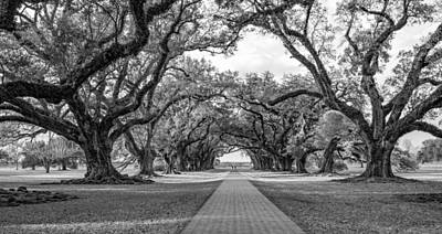 Oak Alley Plantation Photograph - Oak Alley Path 2 - Bw by Steve Harrington