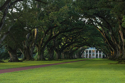 Photograph - Oak Alley Plantation In The Summer Time by Chris Coffee