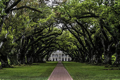 Photograph - Oak Alley Plantation, Vacherie, Louisiana by Chris Coffee