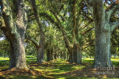 Oak Alley Retreat Avenue St Simons Island Ga Art Print by Reid Callaway
