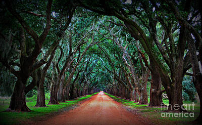 Oak Alley Road Art Print by Perry Webster