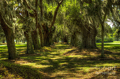 Oak Alley Sea Island Golf Club St Simons Island Ga Art Print by Reid Callaway