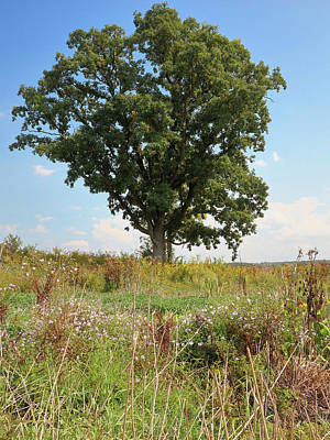 Photograph - Oak And Aster by Scott Kingery
