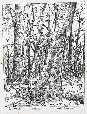 Drawing - Oak And Beech Trees In The Woods Ink Drawing by Martin Stankewitz
