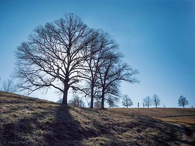 Photograph - Oak And Clear Sky by Brian Shepard