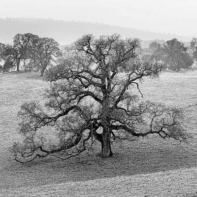 Amador County Photograph - Oak And Fog In Winter - Amador County, California by Steve Ellison