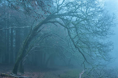 Photograph - Oak And Fog by Jonathan Nguyen