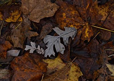 Photograph - Oak And Maple Leaves by Photography by Tiwago