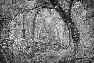 Photograph - Oak And Sycamore Jungle by Alexander Kunz