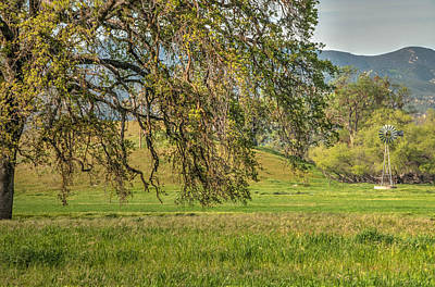 Photograph - Oak And Windmill In Meadow by Connie Cooper-Edwards